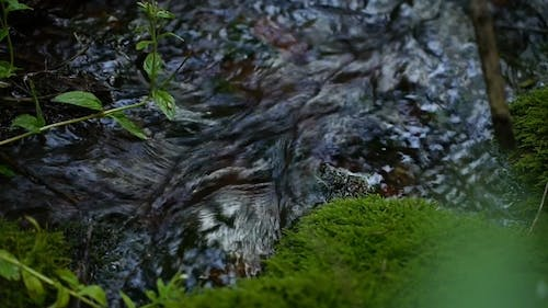 Pure Spring Water In The Creek In The Mountains