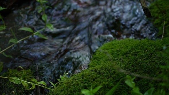 Moss Growing Near a Creek Drinking Water