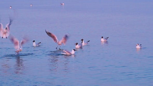 Thumbnail for Seagulls Flying Over the Sea