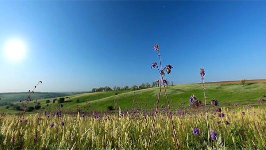 Thumbnail for Spring Landscape