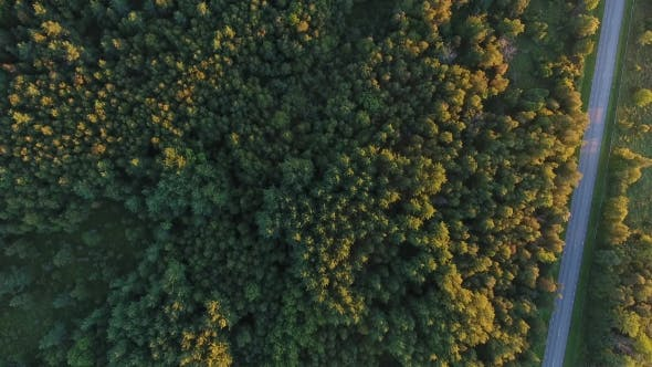 Thumbnail for Aerial View To Forest And Car Driving On Road 15