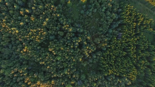 Thumbnail for Aerial View To Green Summer Forest And Power Line 16