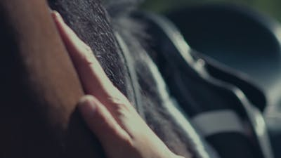Horse Mane. Woman's Hand Stroking The Horse. Harness For Horses
