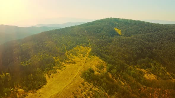 Drone Flies Above Hill with Pine Trees
