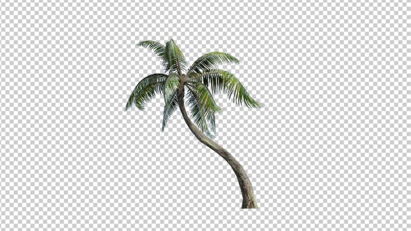 Thumbnail for Palm Tree - 1