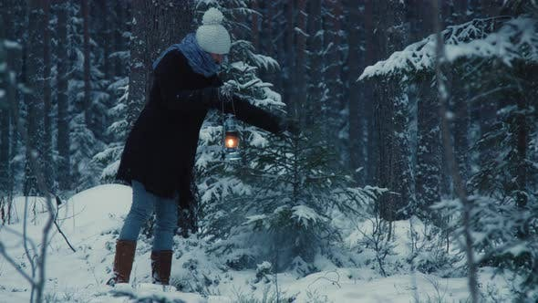 Thumbnail for Looking for Christmas Tree