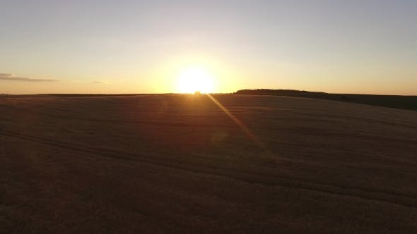 Thumbnail for Evening Flight Over The Wheat Field