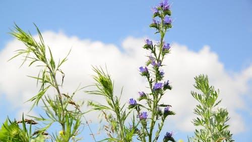 Meadow Flowers Grass Against a Sky
