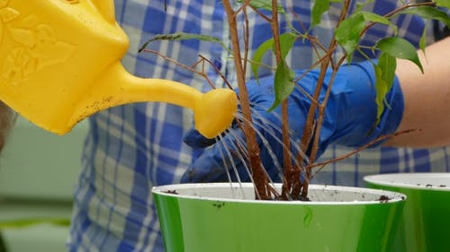 Housewife Watering Plant After Planting