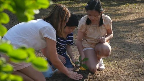 Asian Mother And Children Planting Young Tree In Black Soil Together