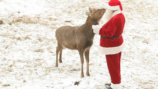 Thumbnail for Santa Feeding Deer