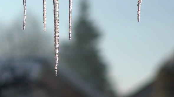 Icicle Hanging From the Roof. Dripping Icicles.