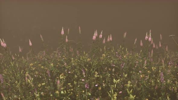 Wilde Feldblumen im tiefen Nebel
