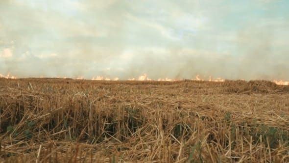 Thumbnail for Burning Smoky Field