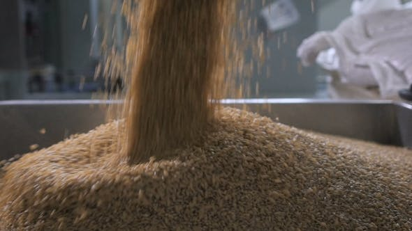 Thumbnail for At The Factory For Sorting And Packaging Of Cereals And Grains. Worker Pours Into a Special Tank