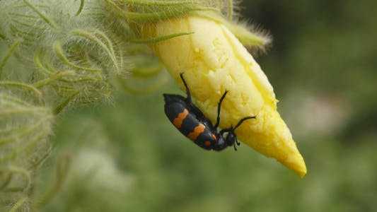 Insect With Flower