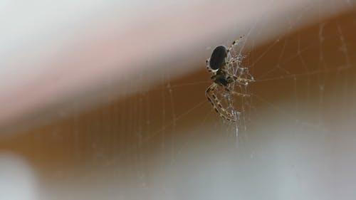 Spinne auf dem Netz, isst Beute