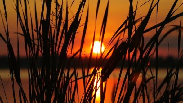 Thumbnail for Reeds On Sunset Landscape