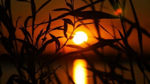 Cover Image for Reeds On Sunset Landscape