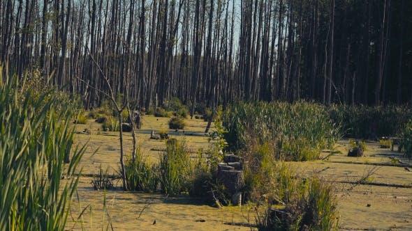 Thumbnail for Marshland. Impassable Terrain.