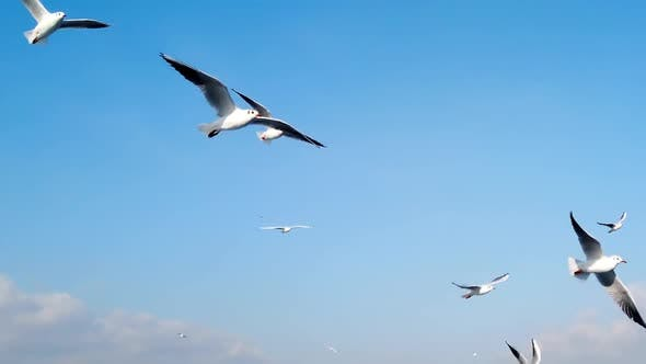 Thumbnail for Seagulls Flying In Sky