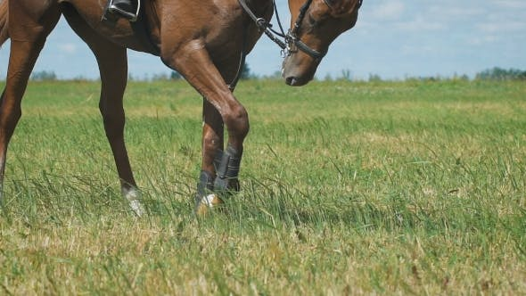 View On The Hooves Of Horse's Legs At a Field