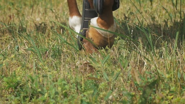 Thumbnail for View On The Hooves Of Horse's Legs At a Field. Power