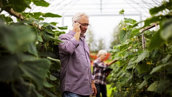Thumbnail for Old Man Calling On Smartphone In Farm Greenhouse
