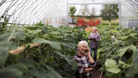 Thumbnail for Old Woman Calling On Smartphone In Farm Greenhouse