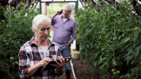 Thumbnail for Old Woman With Tablet Pc In Greenhouse On Farm