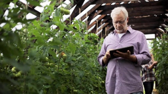Thumbnail for Old Man With Tablet Pc In Greenhouse On Farm