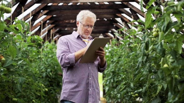 Thumbnail for Old Man With Clipboard In Greenhouse On Farm