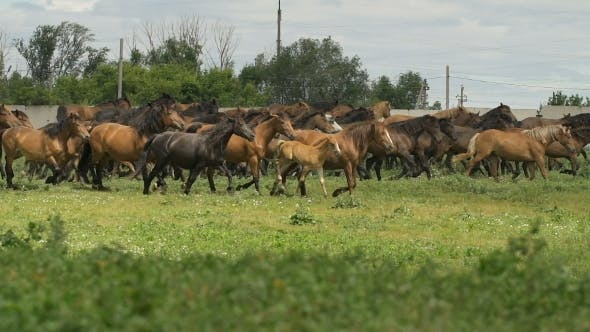 Thumbnail for Herd Of Horses Running On The Pasture In Autumn