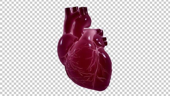 Thumbnail for Heartbeat