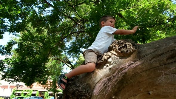 Cover Image for Baby Sitting On a Tree, a Little Boy Playing In a Tree, Flying Soap Bubbles, Kid Catches His Hands