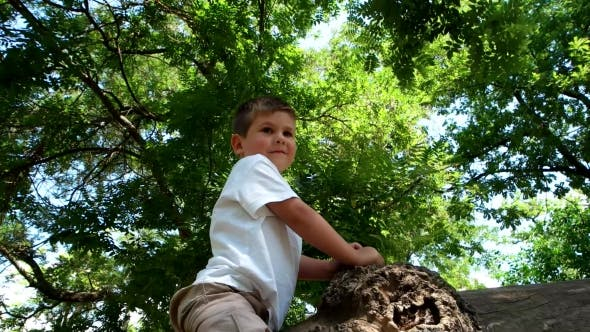 Thumbnail for Children Playing In a Tree, a Child Sitting On a Tree Shows Class, Approval Gesture, a Little Boy