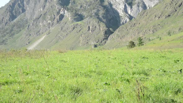 Thumbnail for Hiking Man Walking on Green Mountain Meadow with Backpack. Summer Sport and Recreation Concept