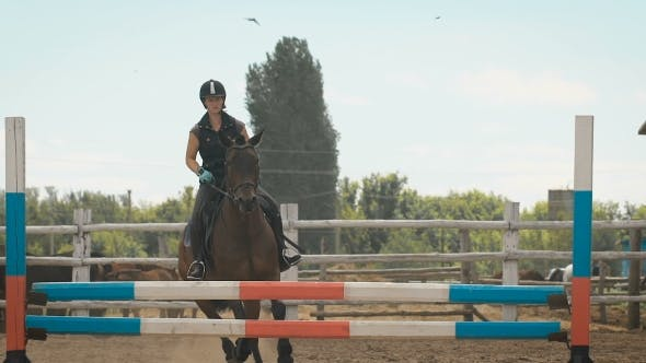 Thumbnail for Young Woman Jumps Horse Over An Obstacle During Her Training In An Arena
