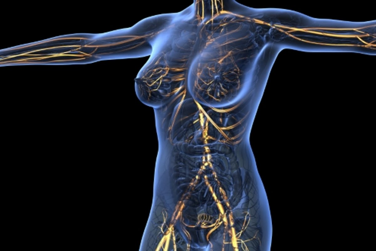 Human Body With Glow Blood Vessels By Icetray On Envato Elements