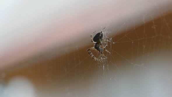 Cover Image for Spider On The Web, Eats Prey