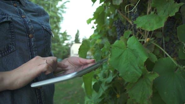 Thumbnail for Farmer In Vineyard