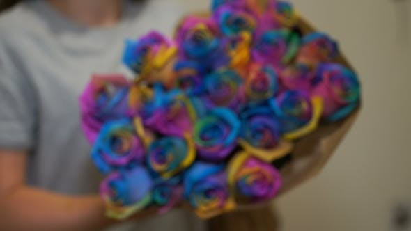 Thumbnail for Footage Woman Holding a Bouquet Of Rainbow Roses.