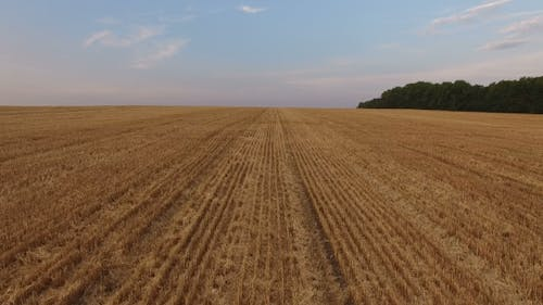 Aerial Moving Of Wheat Stubble In