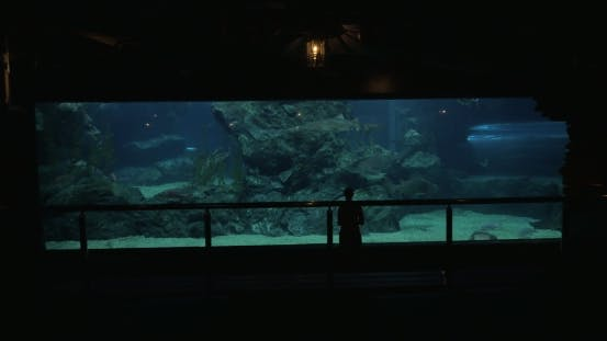 Thumbnail for Woman In Bangkok, Thailand At The Oceanarium Of Siam Ocean World Take Pictures On Tablet Of Fish