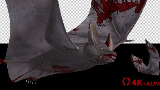 Thumbnail for Vampire Bat in Blood - Flying Cycle - Side Angle - 4K