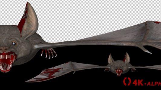 Thumbnail for Vampire Bat in Blood - Flying Loop - Front View - 4K