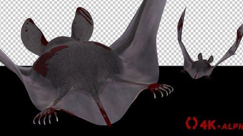 Vampire Bat in Blood - Flying Cycle - Back Side - 4K