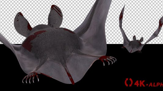 Thumbnail for Vampire Bat in Blood - Flying Cycle - Back Side - 4K