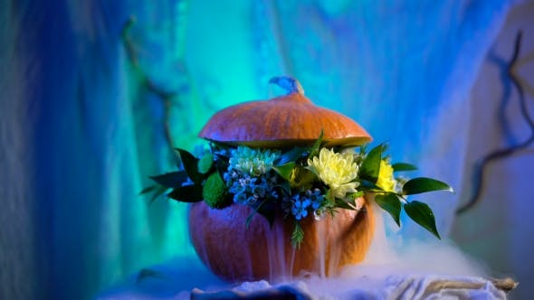 Thumbnail for Flower Arrangement On The Basis Of The Pumpkin. Mystic Steam Flowing Through The Petals