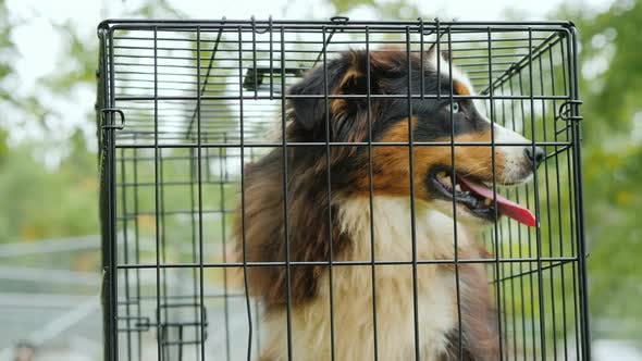 Thumbnail for A Frightened Dog in a Cage. Animal Shelter